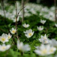 Весна... :: Виктор Желенговский