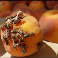 Два с половиной персика и восемнадцать пчёл... :: Кай-8 (Ярослав) Забелин