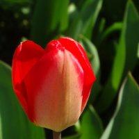Примета апреля... :: Тамара (st.tamara)