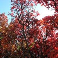 На красной планете 3 (Скумпия осенью) :: Natali