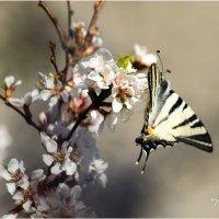 spring12 :: yameug _