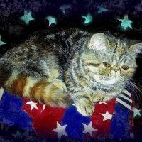Ночные думки малыша-котишки... :: Людмила Богданова (Скачко)
