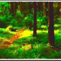 Утро в лесу :: Григорий Кучушев