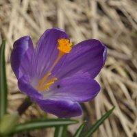 Весна :: Михаил Фролов