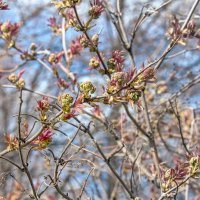 Весна ... :: Kirill