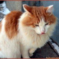 Бело-рыжий котэ :: Андрей Заломленков