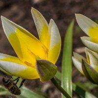 Весна красна :: Алексей Статилко