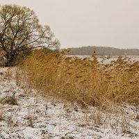 Снежное апрельское утро. :: Виктор Евстратов