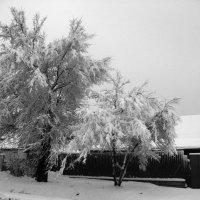 Зимняя весна :: Инна Буяновская