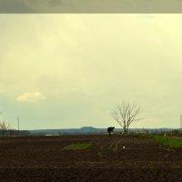 Весна - это не только цветочки... :: Валентина Данилова