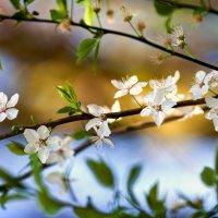 веточка весны :: Лика Охрименко