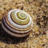 Макро на песке :: Владимир Самсонов
