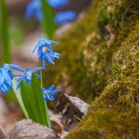 Весна :: Илья Костин