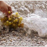 Самый лучший виноград... :: Кай-8 (Ярослав) Забелин
