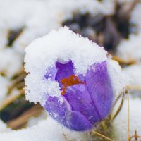 цветы :: evgeny