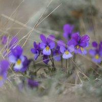 Мы тоже ждали весну! :: Михаил