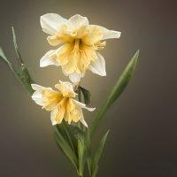 цветы апреля :: георгий  петькун