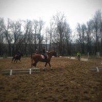 Выезд лошадей :: Юрий Тихонов