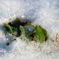 Отмороженный :: Денис Масленников