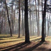 Подсыхают вешние поляны... :: Лесо-Вед (Баранов)