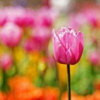 весна :: Евгения Шабалтас