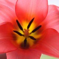 Чтоб в душе цвела Весна! :: Mariya laimite