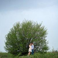 Одинокое дерево :: Иван Ткаченко