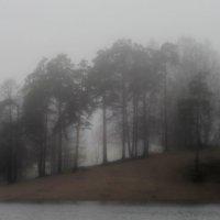 В роще сосновой заблудился туман.... :: Юрий Цыплятников