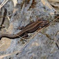 """""""Salamander"""".) :: Юрий Скрипченков"""