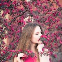 в цвету :: Алла Панасенко
