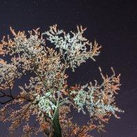 Ночная вишня :: Дмитрий Крупица