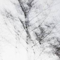 """Абстрактная фотография-""""ЛЕС"""" :: Екатерина Анзылова"""
