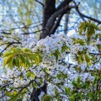 Весна!!! :: Леонид Соболев