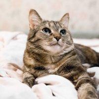 Глаза кошки :: Екатерина Сидорова
