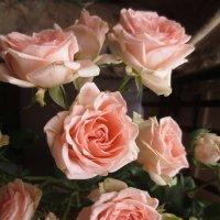 царица цветов :: Елена