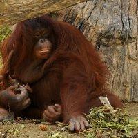 Заботливая мамаша... :: Виктор Льготин