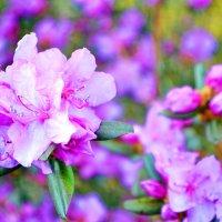 Нежный цветок. :: Валерия Чумакова