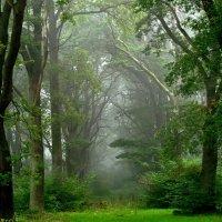 Утренний туман :: Милешкин Владимир Алексеевич