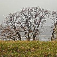 На берегу Невы / или Плохой погоды не бывает-2/. :: Фотогруппа Весна.