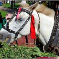 Городская лошадка :: Андрей Заломленков