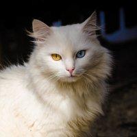 Глаза как глаза :: Анна Никонорова
