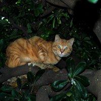 Кот на дереве с цветочками :: ФОТО ОХОТНИК