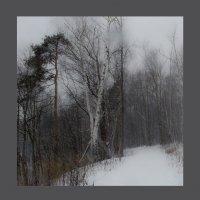Зимний лес :: Анжелика