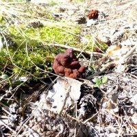 Первые грибы :: Алексей Логинов
