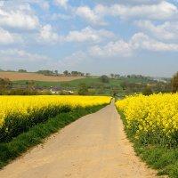 Запах весны :: Boris Alabugin