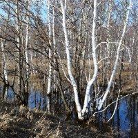 Весна пришла - Весне дорогу! :: Кристина Девяткина
