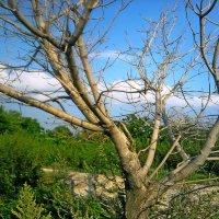 Пустое Дерево. :: Кристина Девяткина