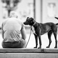 Человек и Собака :: Олег Белоусов