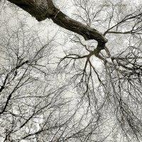 Деревья. Скоро весна. :: Levon Kiurkchian