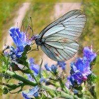 Бабочки порхают :: Лидия (naum.lidiya)
